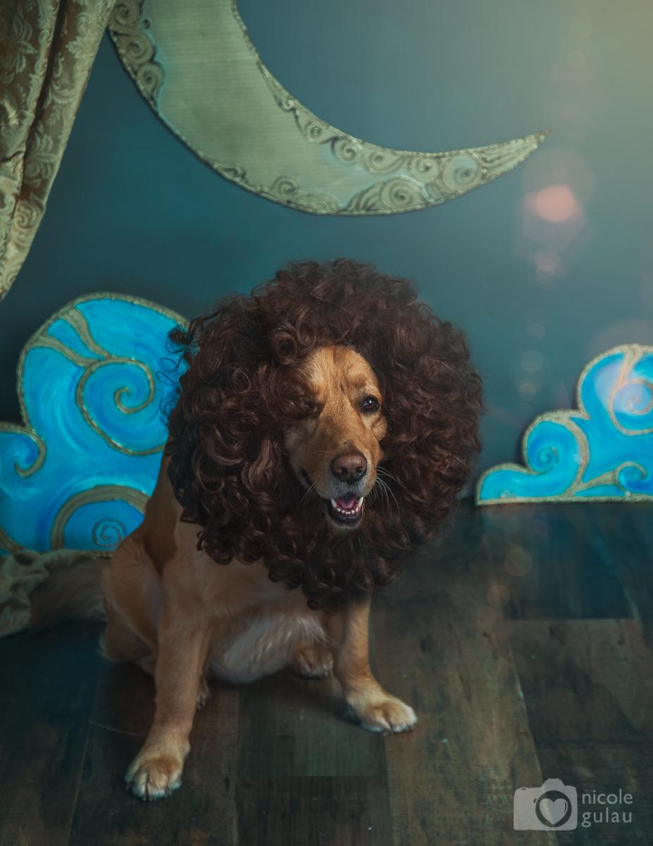 Fotografía Fantasía Carnaval león
